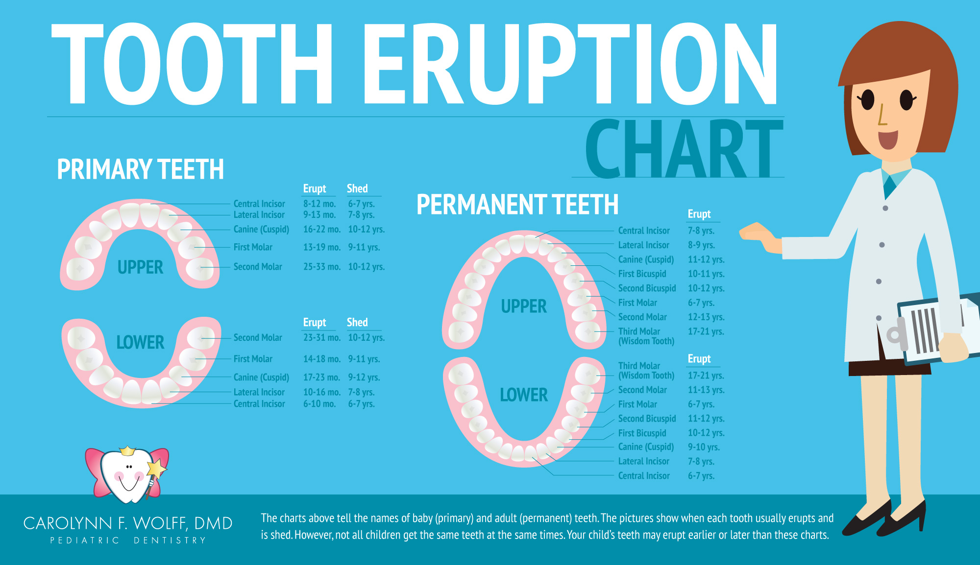 Permanent teeth chart timiznceptzmusic permanent teeth chart ccuart Images